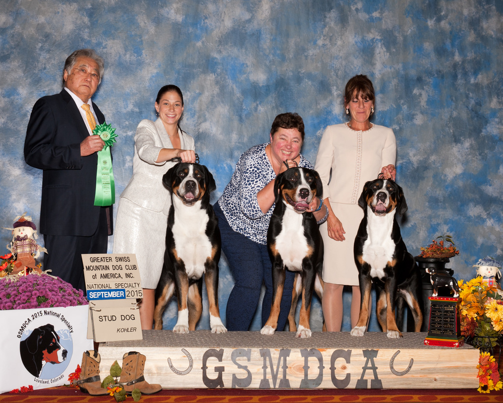 greater swiss mountain dog club of america - 1000×800
